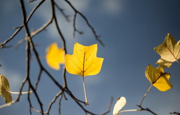 Picture autumn, tree, garden, yellow leaf