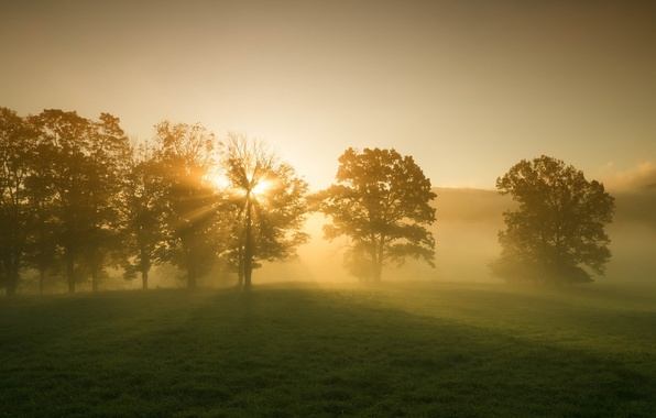 Picture greens, grass, leaves, the sun, rays, trees, landscape, nature, background, tree, dawn, widescreen, Wallpaper, beauty, ...