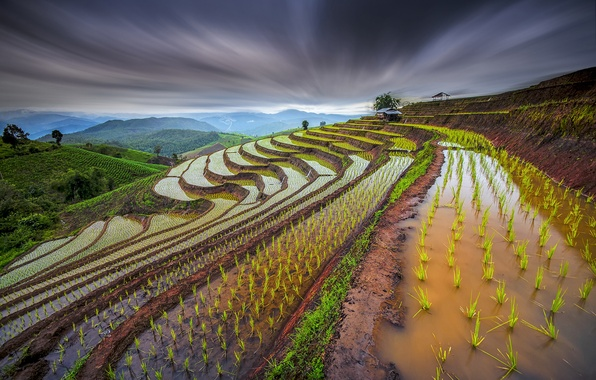 Picture the sky, water, sprouts, the slopes, excerpt, Thailand, rice fields