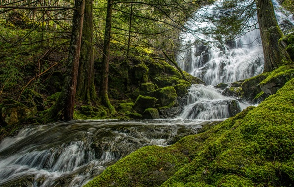Picture greens, forest, trees, stream, stones, for, waterfall, moss, Canada, Mary Vine Creek