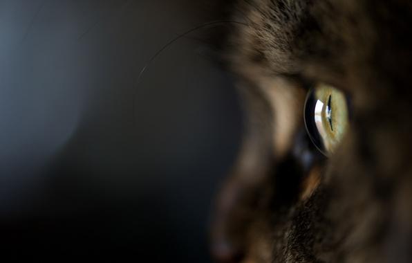 Picture cat, cat, macro, eyes, the dark background, wool, Kote