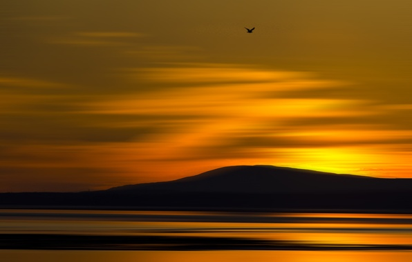 Picture sea, flight, sunset, nature, bird, mountain, hill