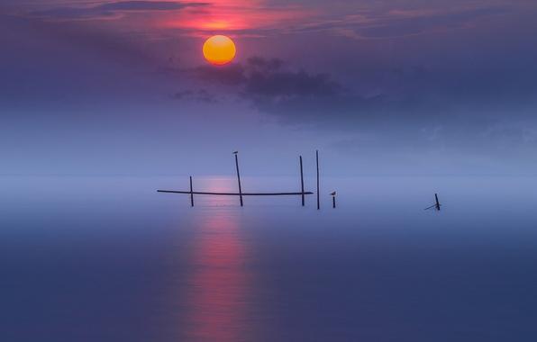 Picture sea, birds, night