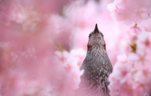 Photo wallpaper summer, flowering, bird, nature