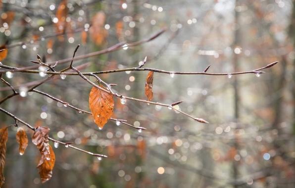 Picture leaves, drops, macro, Shine, web, branch