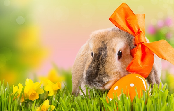 Picture grass, flowers, nature, holiday, egg, spring, rabbit, Easter, bow, daffodils, bokeh, Easter