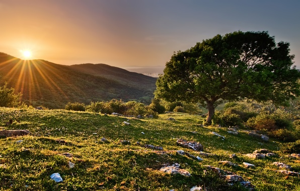 Picture the sun, rays, sunset, tree, hills, spring, Italy, Italy, reserve