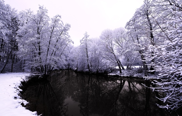 Picture winter, forest, water, snow, trees, nature, river