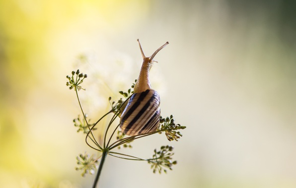 Picture shell, snail, buds, stalk