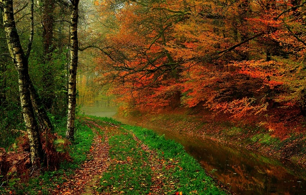 Picture autumn, forest, leaves, water, trees, nature, river, hdr, walk, forest, river, trees, nature, water, autumn, …