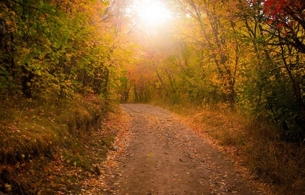 Picture ROAD, FOREST, LEAVES, TREES, AUTUMN, FOLIAGE