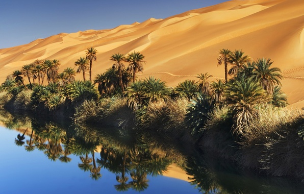 Picture sand, the sky, water, palm trees, desert, oasis