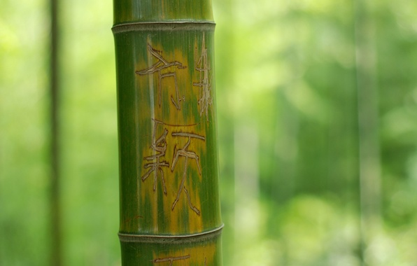 Picture Macro, Tree, Green, Bamboo, Trunk, Background, The inscription, Nature, Characters