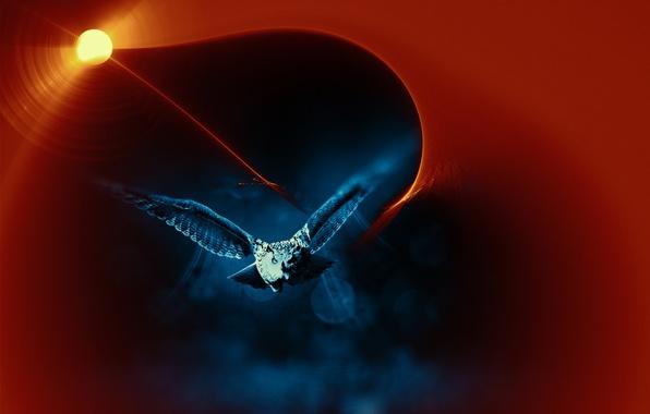 Picture night, bird, flight