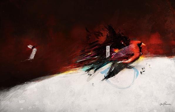 Picture red, figure, beak, Bird, characters