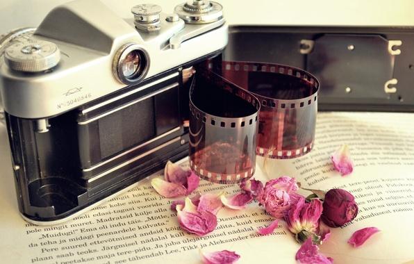 Picture flowers, camera, petals, the camera, dry, film, book, film