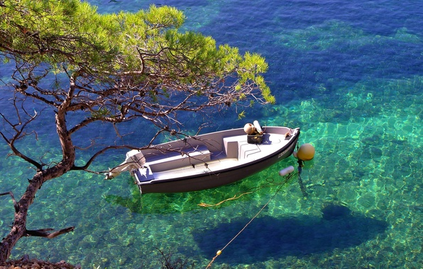 Picture water, transparency, tree, boat, shadow, Bay