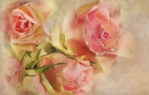 Picture drops, flowers, pink, roses, texture, buds