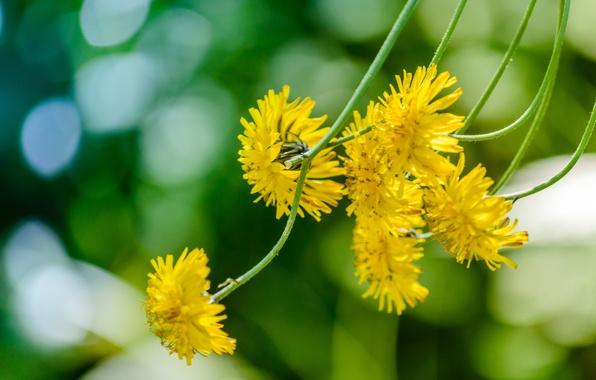 Picture macro, stems, yellow flowers, Jastrebinka