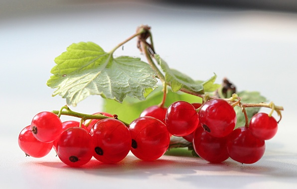 Picture leaves, berries, red, currants