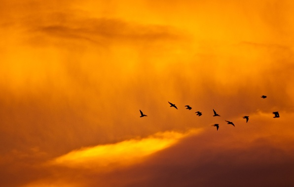 Picture the sky, birds, minimalism, 149