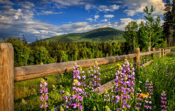 Picture road, forest, flowers, mountains, nature, the fence, spring