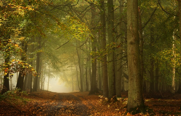 Photo wallpaper road, autumn, forest, trees, England, England, Ashridge Wood, Forest Ashridge, Berkshire, Berkshire