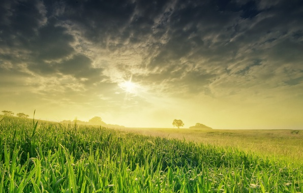 Picture field, the sky, the sun, nature, spring