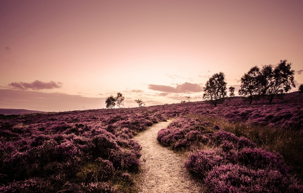 Picture road, field, trees, landscape, nature, England, plants, the evening, path, England, Heather, Derbyshire, Derbyshire