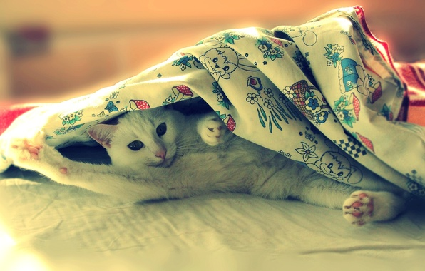 Picture cat, bed, lies, Pusya