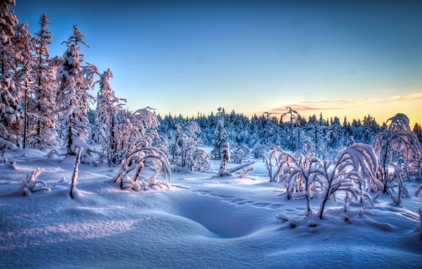 Picture winter, frost, snow, trees, sunset, traces, the evening