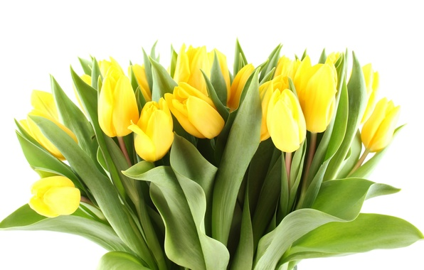 Picture leaves, flowers, bright, beauty, bouquet, petals, light, tulips, yellow, yellow, flowers, beauty, petals, bouquet, bright, …