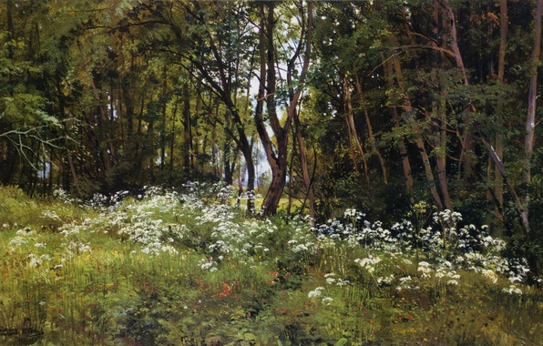 Picture forest, glade, the edge