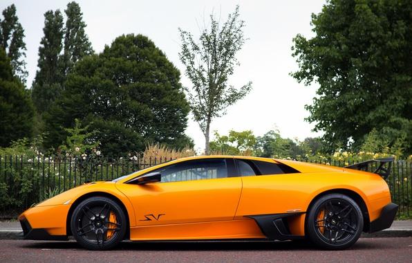 Picture orange, Lamborghini, Murcielago, orange, LP670-4, Lamborghini