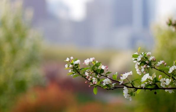Picture macro, glare, color, branch, spring, Apple, bokeh, razmytost