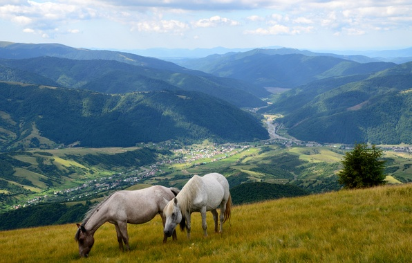 Picture grass, mountains, field, valley, slope, horse, meadow, panorama, forest