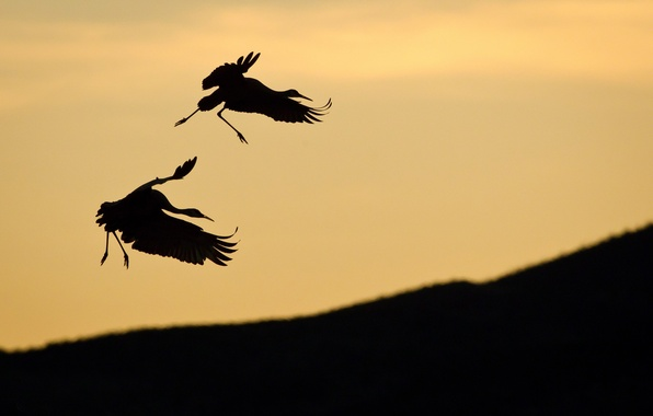 Picture PAIR, The SKY, BIRDS, SLOPE, SILHOUETTES, STORK
