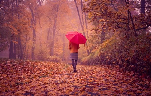Picture road, autumn, girl, landscape, foliage, back, red umbrella