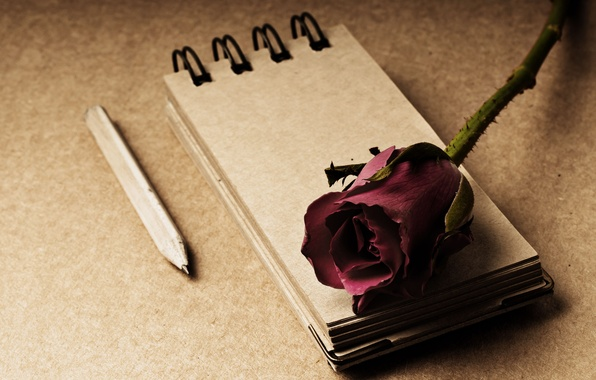 Picture flowers, style, background, rose, Notepad, pencil, red, widescreen, full screen, HD wallpapers, flower, widescreen, notebook
