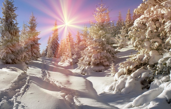 Picture winter, forest, the sun, snow, tree, nature, winter, snow