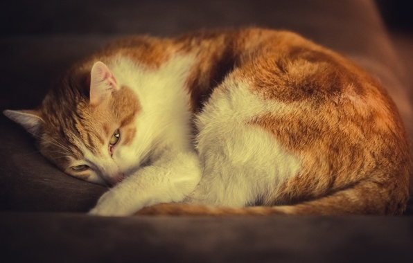 Picture cat, cat, stay, white-red