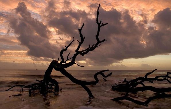 Photo wallpaper sea, 154, horizon, branch, clouds