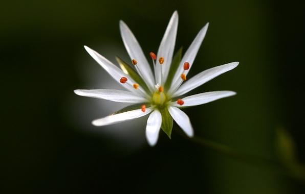 Picture flower, nature, background, plant, petals, stamens