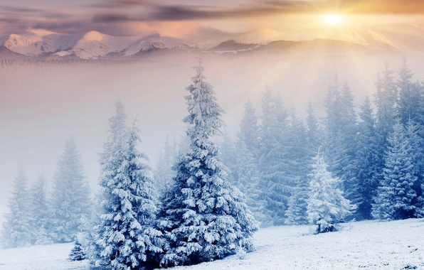 Picture winter, snow, mountains, nature, tree, the sun's rays