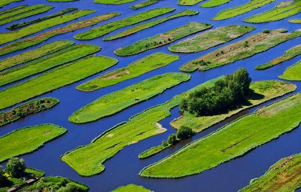 Picture grass, water, trees, island, Netherlands, Jisp