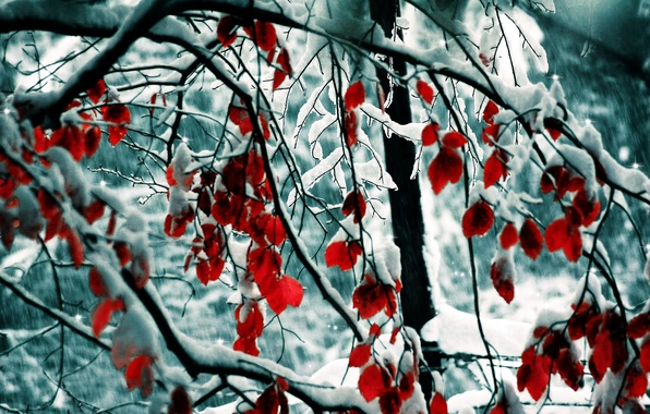 Picture winter, leaves, snow, trees, branches, nature, trees, nature, 1920x1200, winter, snow, leaves, branches