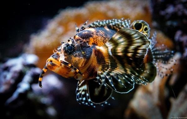 Picture aquarium, fish, underwater world, fins, under water