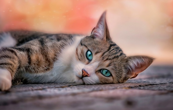 Picture cat, eyes, cat, background, treatment, blur, lies, Mat, looks, usatoll, banding, blue-green