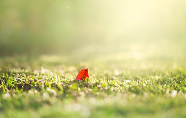 Picture greens, summer, grass, the sun, macro, nature, background, Wallpaper, blur, spring, morning, day, leaf, wallpaper, …