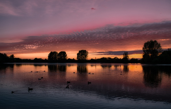 Picture the sky, clouds, trees, landscape, sunset, birds, lake, reflection, England, duck, the evening, UK, orange, …